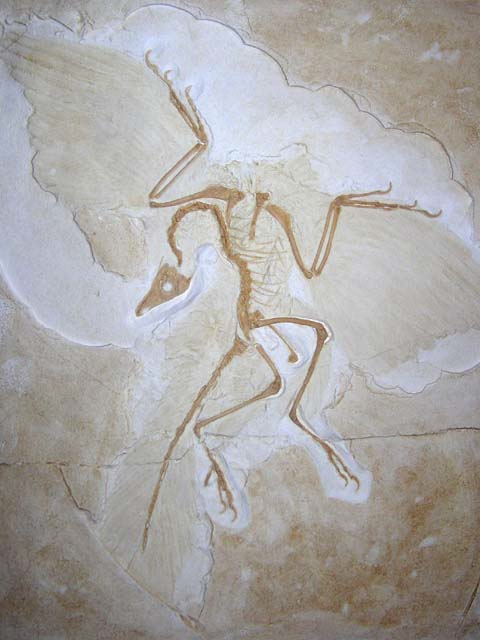 fossil8