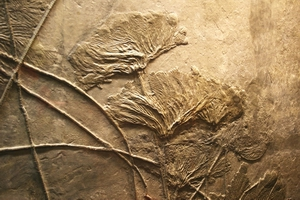 fossil9